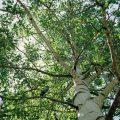 005-Up a Tree