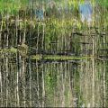 006-The-Swamp