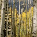 028-Aspen Grove Buffalo Pass