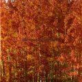 055-Orange Fall