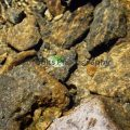 061-Floating-Leaf