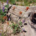 068-Paintbrush and Tree Stump