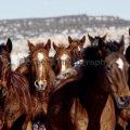 078-Horses Running at You