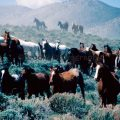 079-Three Rows of Horses in Sage