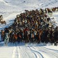 081-Winter Horse Drive