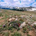 191-Tundra-in-Summer