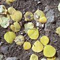 207-Fallen Leaves