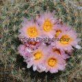 280-Cactus Surprise